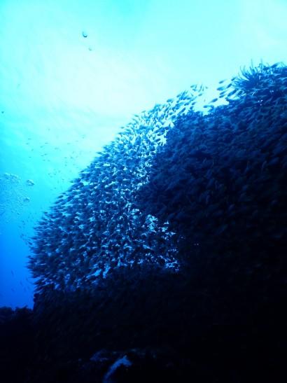 09 小魚の群れ
